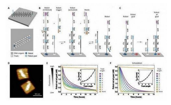 DNA机器人的设计 图源:《科学》杂志
